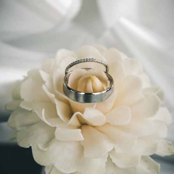 Détail des alliances des mariées Sur une fleur Avec un fond blanc