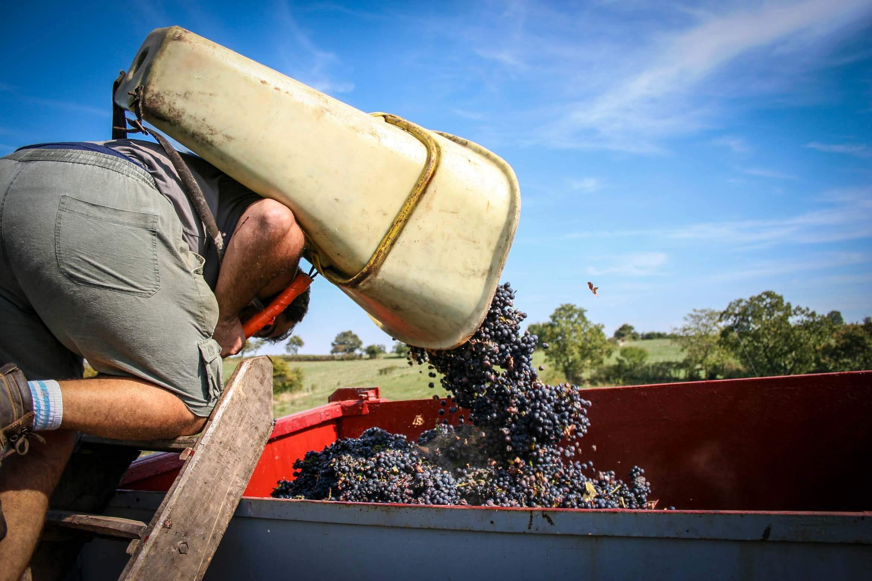 Vendanges dans les vignes ainsi de Bordeaux, événementiel pour chateau du bordelais.
