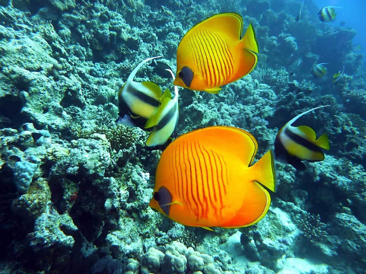 Louer-un-caisson-etanche-pour-photo-sous-marine-a-Bordeaux-en-Gironde_www.photographe-33.fr- photo de poisson location de reflex